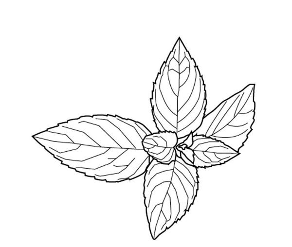 简笔画 设计 矢量 矢量图 手绘 素材 线稿 600_508